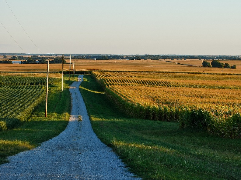 Cornfields Near Normal, IL.jpg